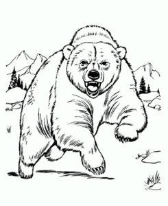 Медведи и мишки картинки раскраски (3)