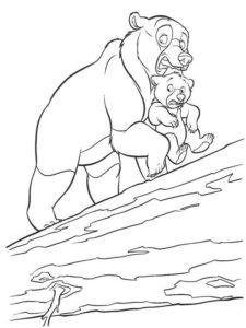 Медведи и мишки картинки раскраски (31)