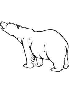 Медведи и мишки картинки раскраски (34)