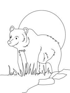Медведи и мишки картинки раскраски (36)
