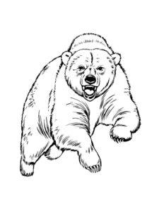 Медведи и мишки картинки раскраски (37)