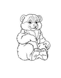 Медведи и мишки картинки раскраски (38)
