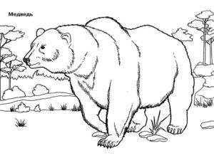 Медведи и мишки картинки раскраски (39)