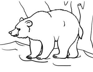 Медведи и мишки картинки раскраски (5)