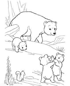 Медведи и мишки картинки раскраски (6)