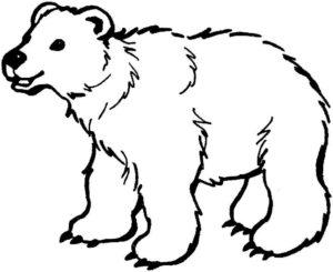 Медведи и мишки картинки раскраски (9)