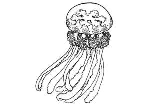 Медуза картинки раскраски (19)