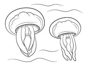 Медуза картинки раскраски (25)