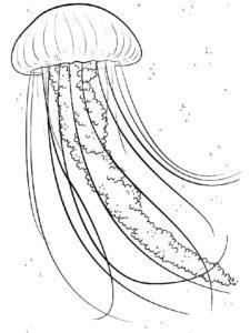 Медуза картинки раскраски (37)
