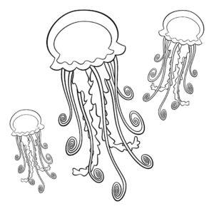 Медуза картинки раскраски (39)