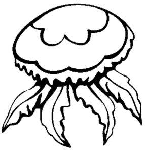 Медуза картинки раскраски (4)