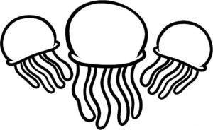 Медуза картинки раскраски (40)