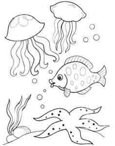 Медуза картинки раскраски (43)