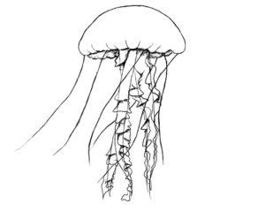 Медуза картинки раскраски (9)
