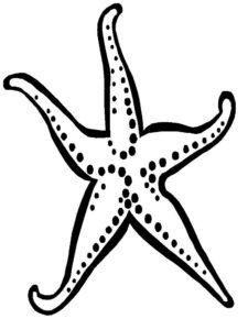 Морская звезда картинки раскраски (15)