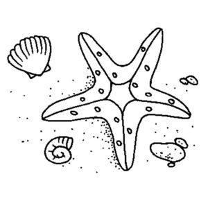 Морская звезда картинки раскраски (3)