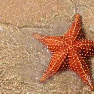 Морская звезда раскраски