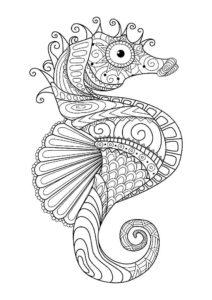 Морской конек картинки раскраски (13)