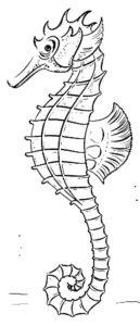 Морской конек картинки раскраски (25)