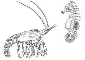 Морской конек картинки раскраски (27)