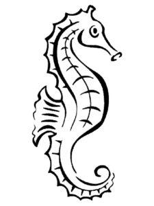 Морской конек картинки раскраски (33)