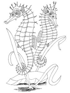 Морской конек картинки раскраски (42)