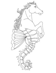 Морской конек картинки раскраски (44)