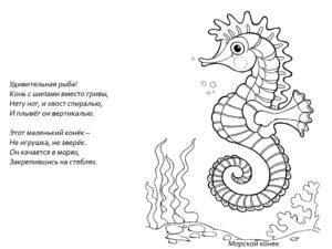 Морской конек картинки раскраски (46)