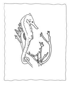 Морской конек картинки раскраски (9)