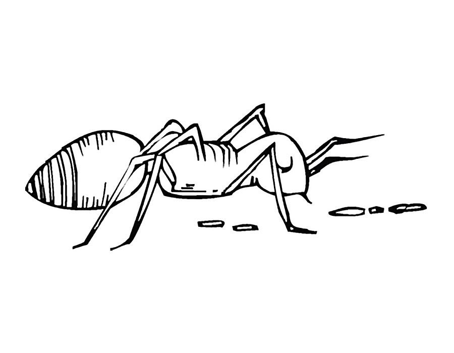Картинка раскраска муравьи