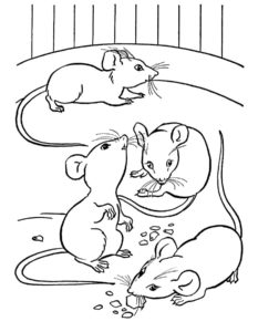 Мышонок картинки раскраски (17)