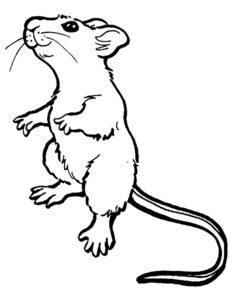 Мышонок картинки раскраски (19)