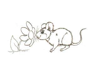Мышонок картинки раскраски (24)