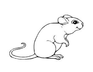 Мышонок картинки раскраски (5)