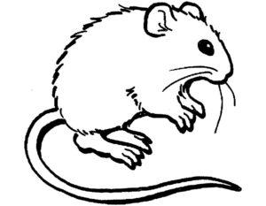 Мышонок картинки раскраски (8)