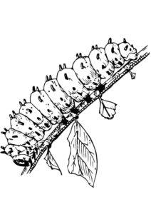 Насекомые гусеница картинки раскраски (26)