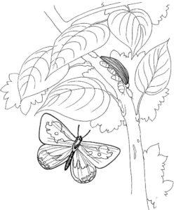 Насекомые гусеница картинки раскраски (28)