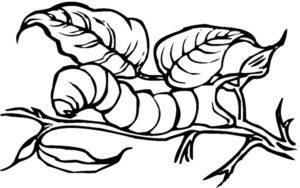 Насекомые гусеница картинки раскраски (30)