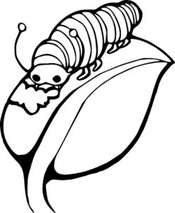 Насекомые гусеница картинки раскраски (33)