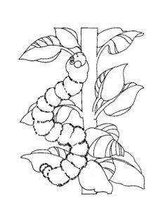 Насекомые гусеница картинки раскраски (46)