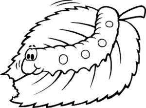 Насекомые гусеница картинки раскраски (5)