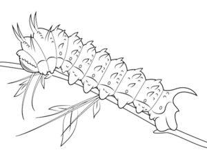Насекомые гусеница картинки раскраски (51)