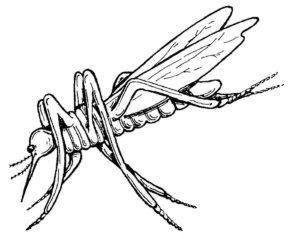 Насекомые комар картинки раскраски (16)