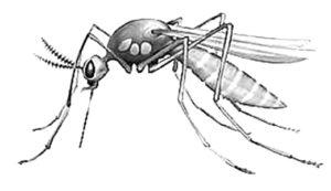 Насекомые комар картинки раскраски (20)