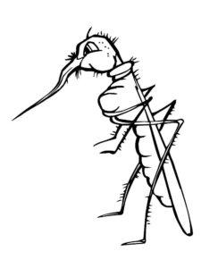Насекомые комар картинки раскраски (26)