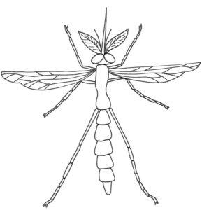 Насекомые комар картинки раскраски (27)
