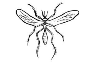 Насекомые комар картинки раскраски (29)
