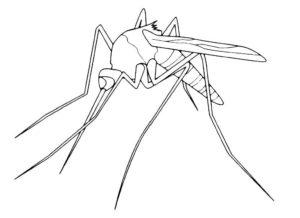 Насекомые комар картинки раскраски (3)
