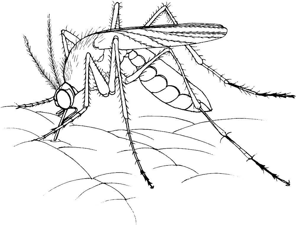 этом возрасте насекомые в картинках черно-белые природа нарядилась шали