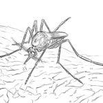 Насекомые комар картинки раскраски (33)